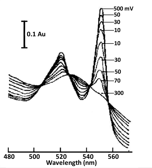 Fig. 4-6 Thin layer spectra of cytochrome C and 2,6-dichloroindophenol mediators under different applied potentials