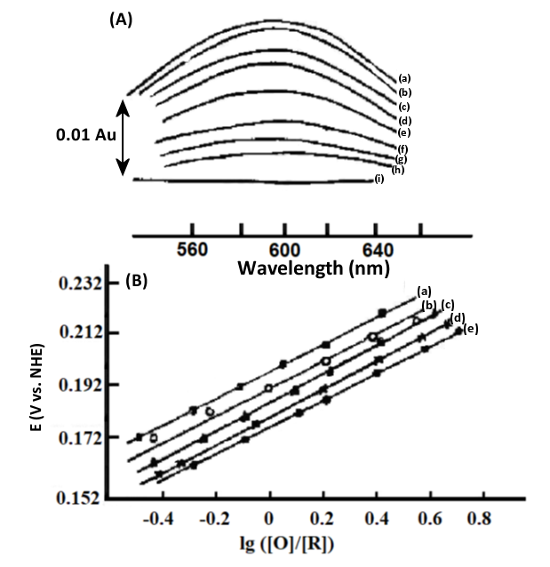 Fig. 4-7 A. Thin-layer spectra of stellate anthocyanins at different applied potentials. B. Nernst diagram at different temperatures.